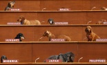 Art Installation Sees Dachshunds Take Over United Nations Meeting